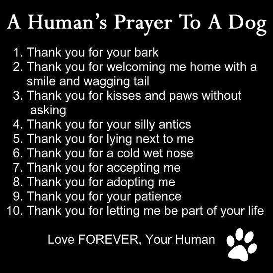 Humans_prayer_to_a_dog